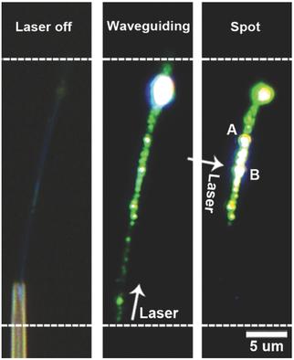 祝贺周佳佳博士后在Advanced Optical Materials上发表论文一篇